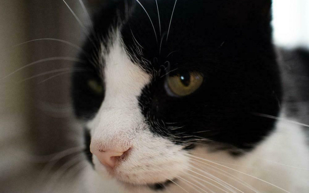 levi kat herplaatser