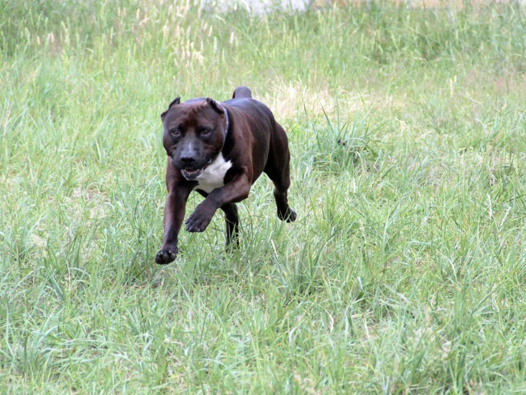 Taiko hond asiel actief