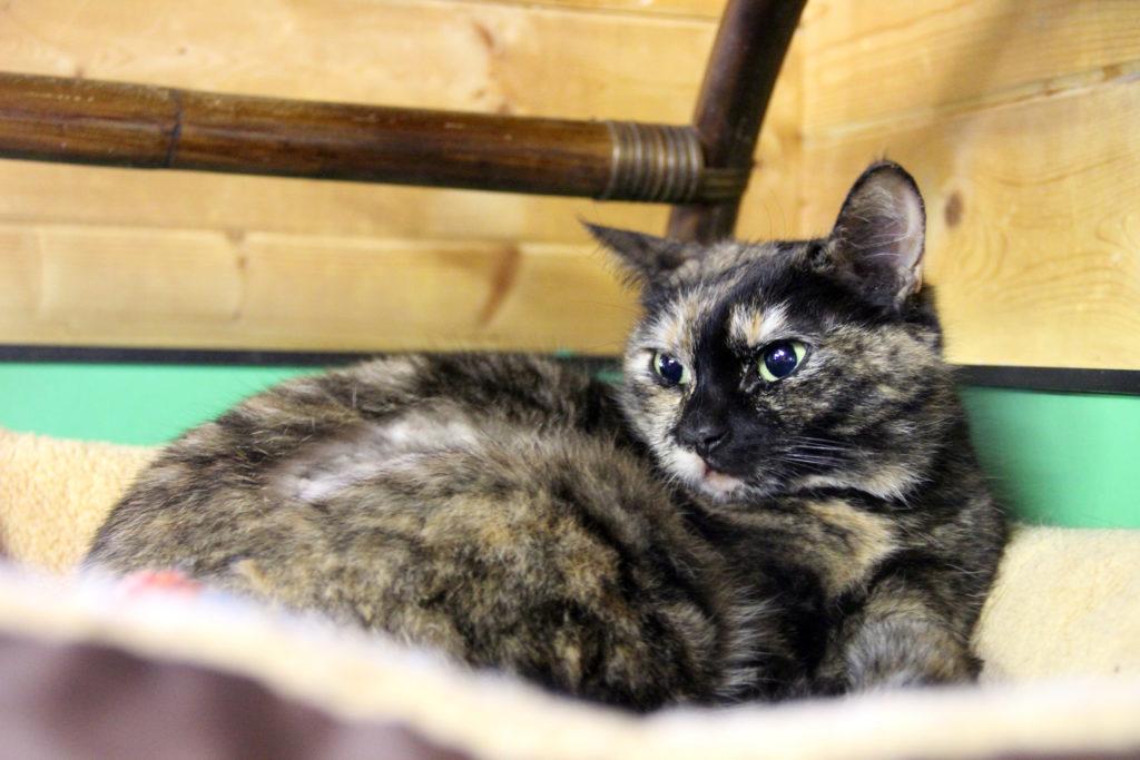 Grietje kat asiel herplaatser