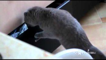 Kat wordt betrapt