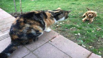 Katten bewaken het fort