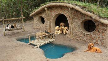 Pups krijgen na hun redding gaaf verblijf