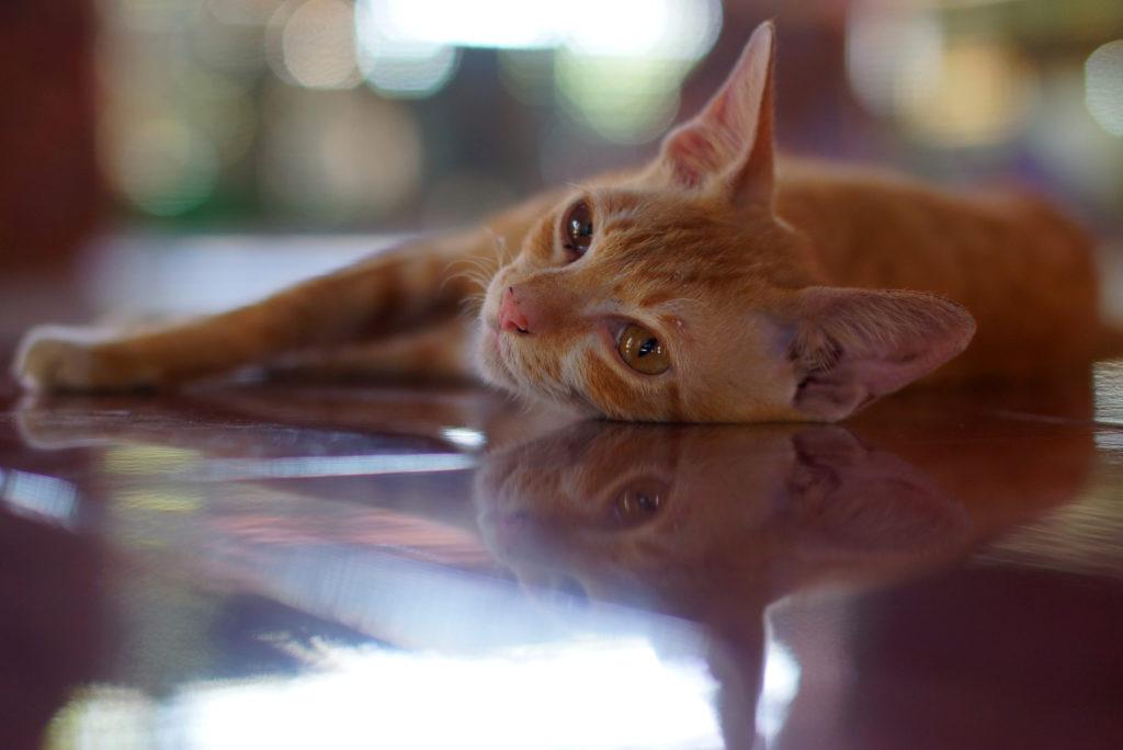 kat afkoelen huis