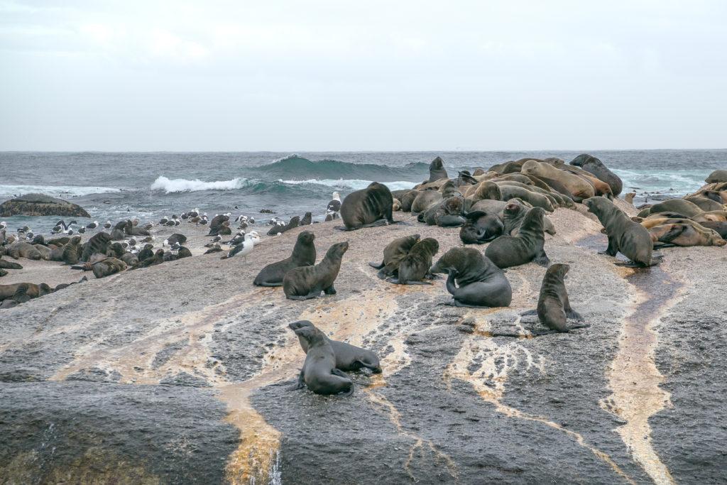 Namibische zeehondenjacht