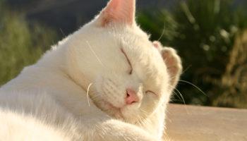 kat afkoelen warmte hitte