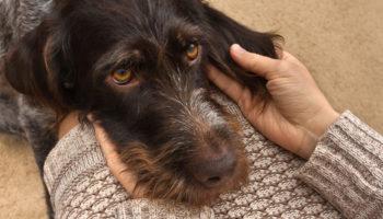 gescheurde kruisband hond knie