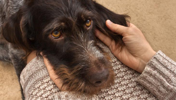 Heeft je hond een gescheurde kruisband?