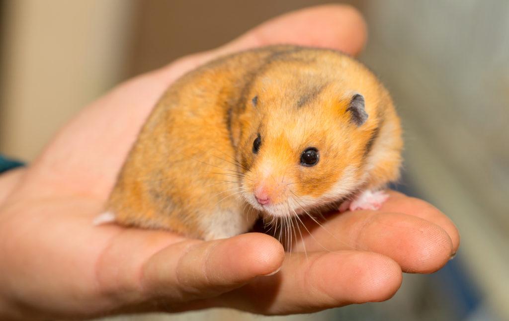 bodembedekking hamster gevoelig