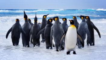 pinguinsoort ontdekt