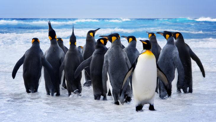 Fossielen van nieuw pinguïnsoort gevonden