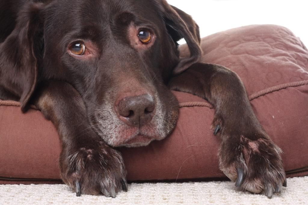 Hond gescheurde kruisban