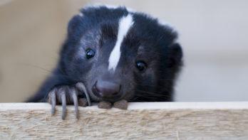 53 exotische diersoorten aangetroffen