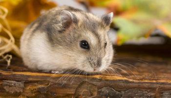 bodembedekking voor hamster