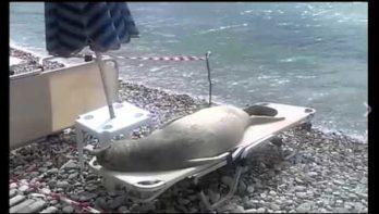 Zeehond heeft momentje voor zichzelf