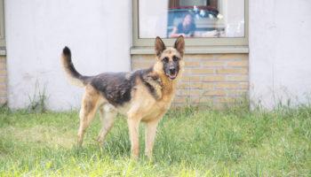 Ajax herder