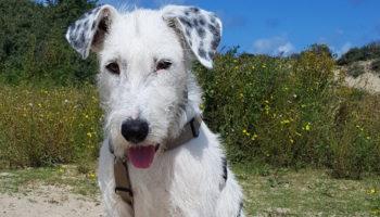 Hond Maxx asiel