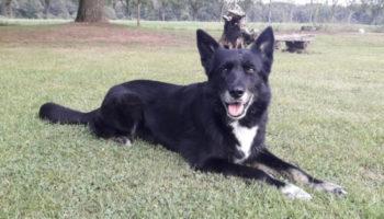 Missy hond asiel herplaatser