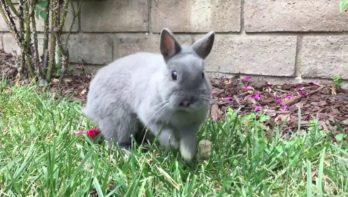 Blij konijn ontdekt de tuin
