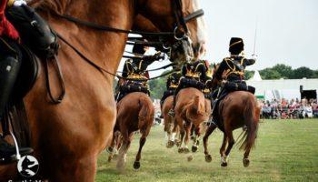 paarden3daagse