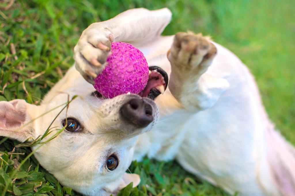 hardlopen met je hond - pauzes