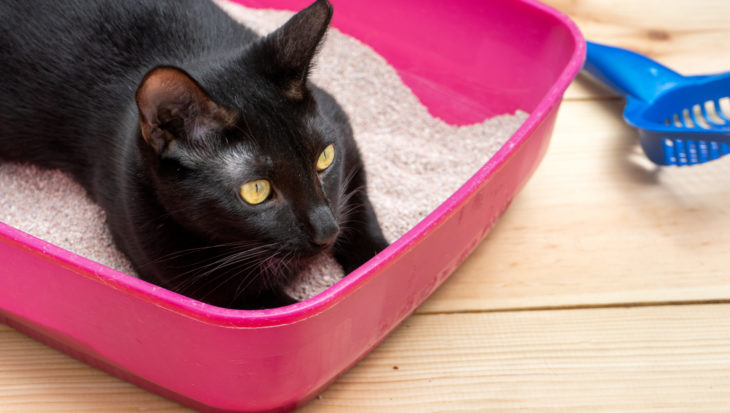 Kattenbak: 7 belangrijke tips