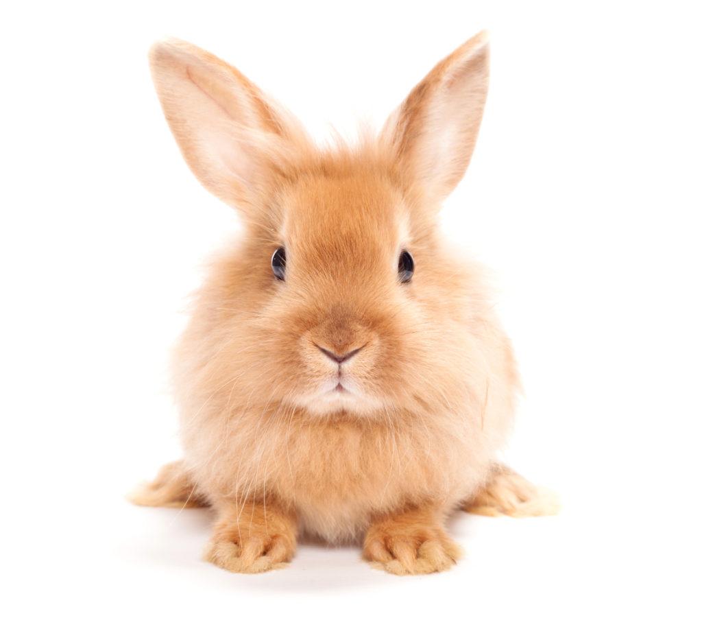 konijn verzorgen: oren en ogen