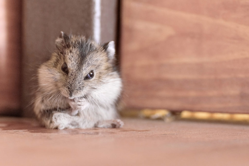 hamster een ren maken