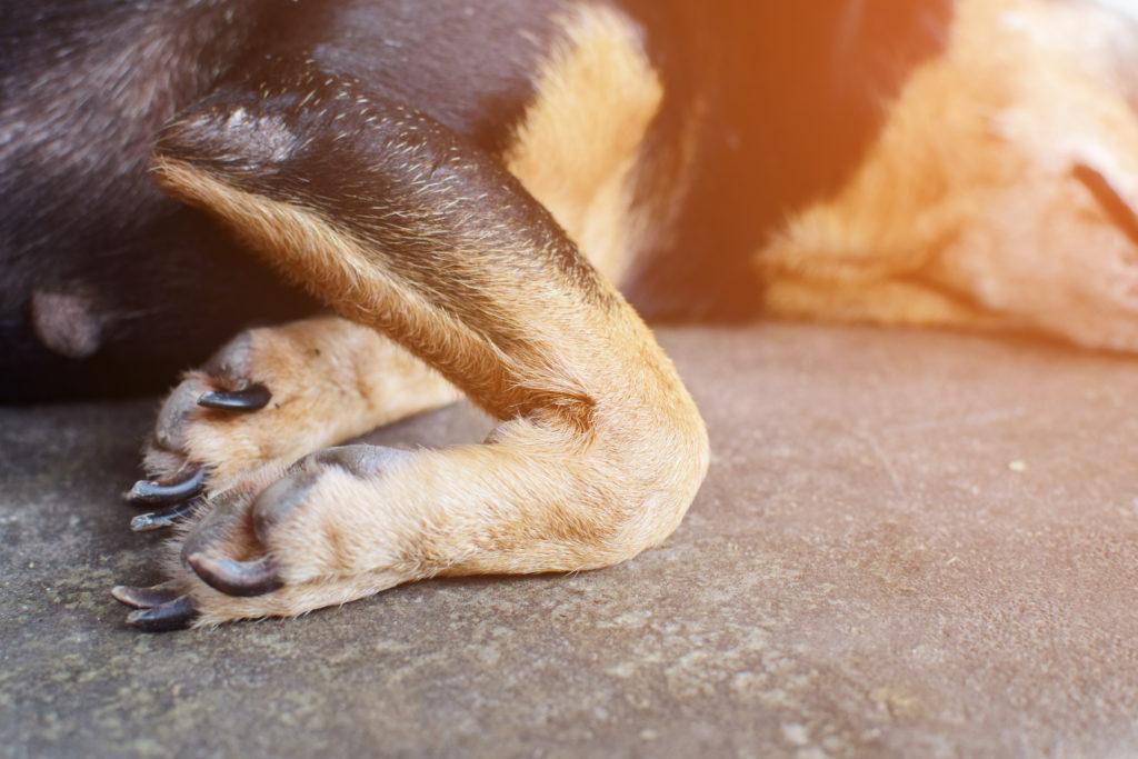 artrose bij je hond slijtage