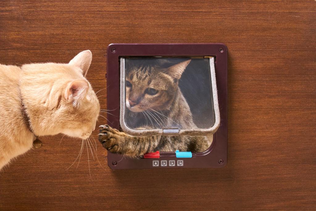 kattenluik wel of niet