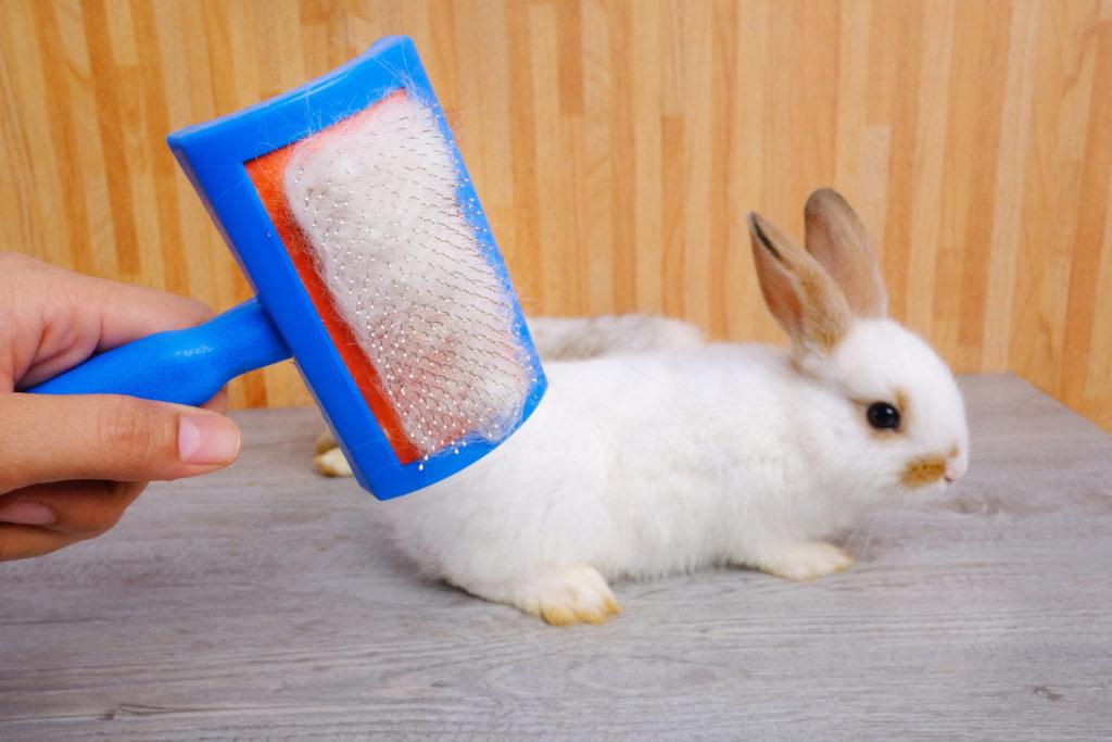 konijn verzorgen: vacht kammen
