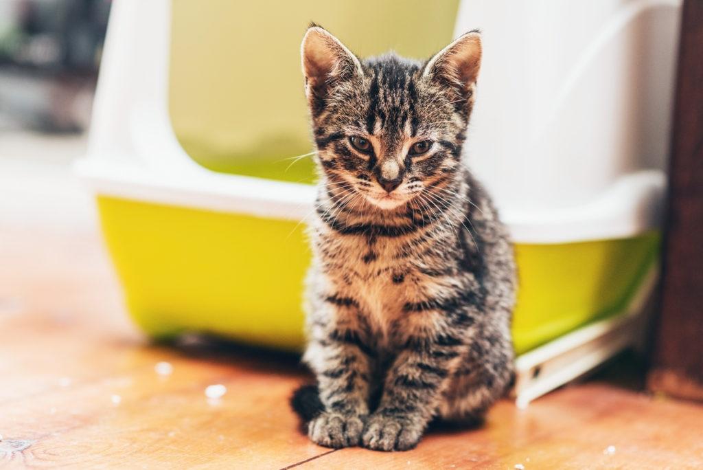 kattenbak grootte
