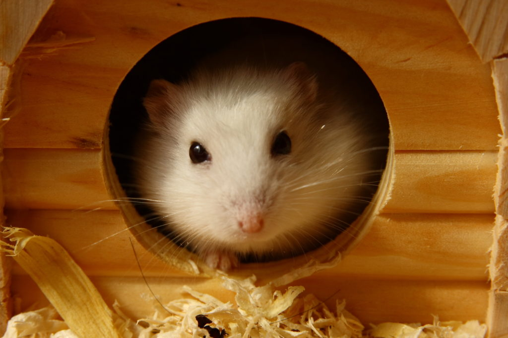 hamster een ren: speelgoed