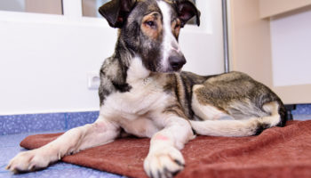 artrose bij je hond