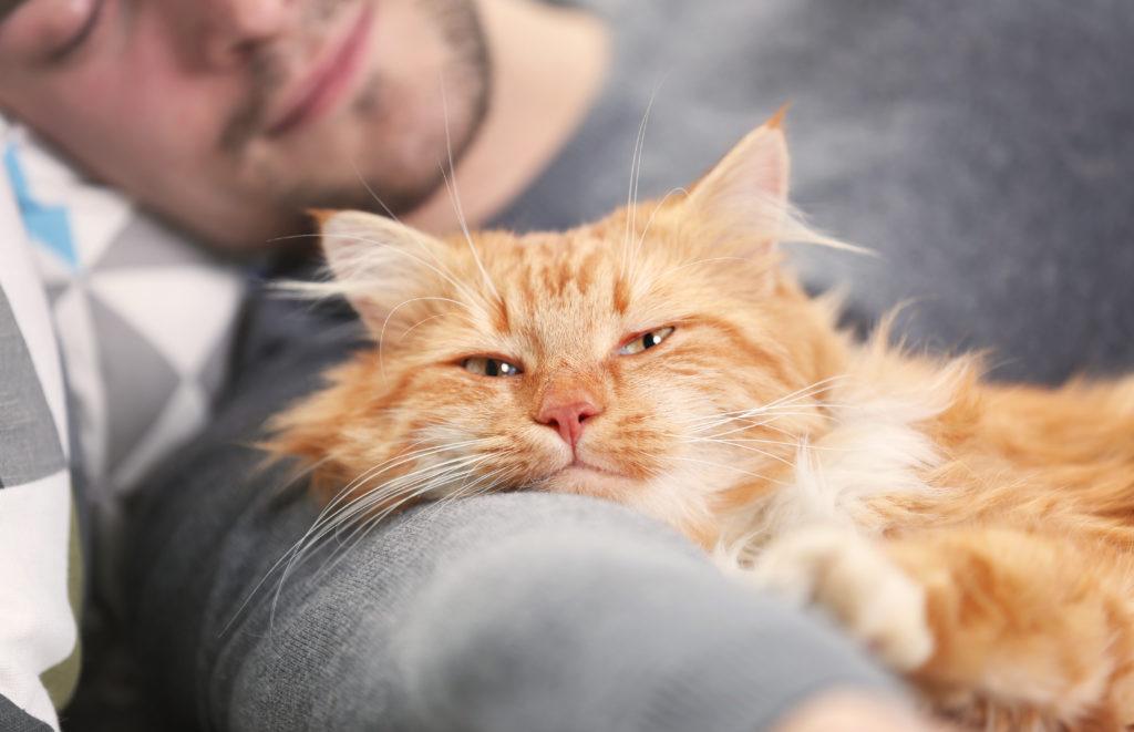 castratie van een kat na operatie