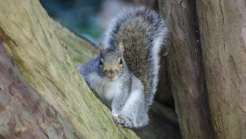 Eekhoorns checken bij vogels of omgeving veilig is