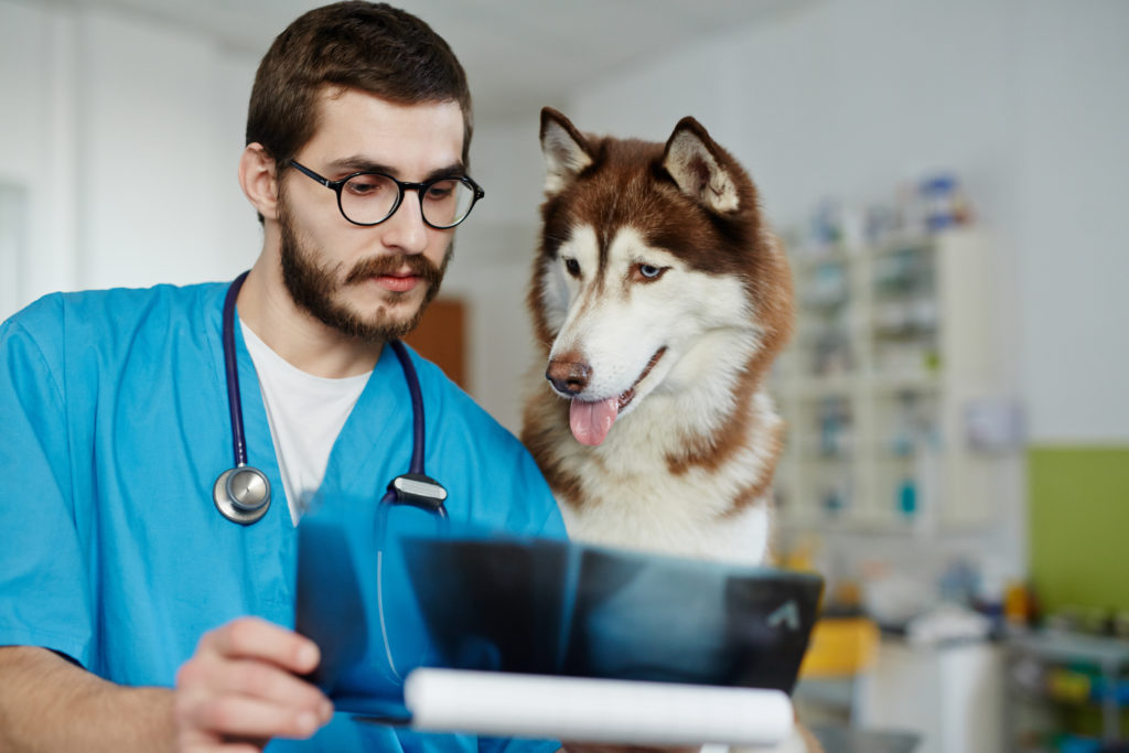 artrose bij je hond röntgenfoto