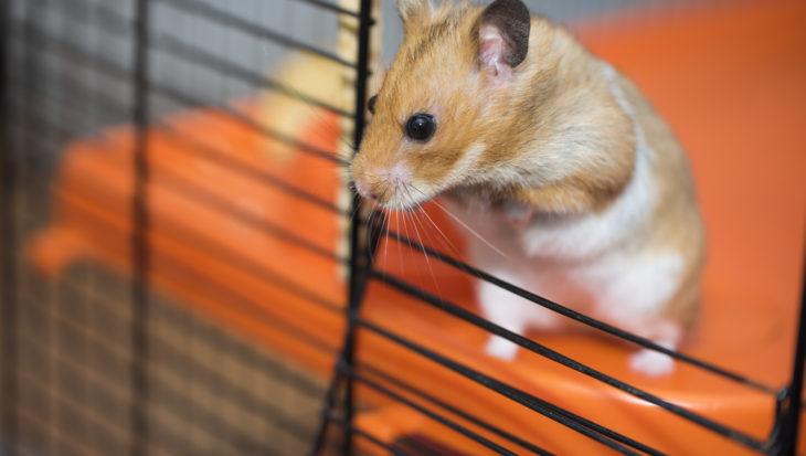 Geef je hamster een ren