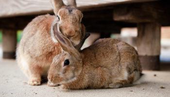 konijn verzorgen