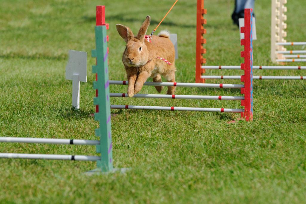 konijn verzorgen: beweging