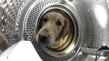 Uniek kijkje vanuit de wasmachine