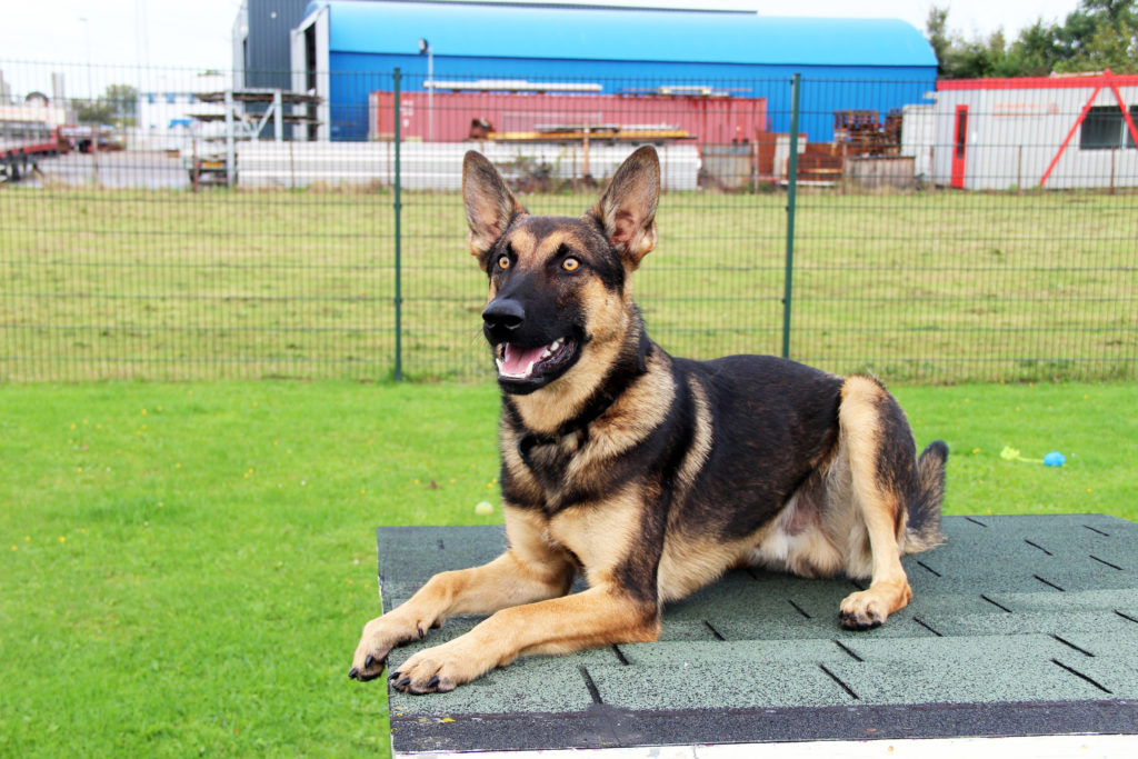 bobbie asiel hond nieuw thuis