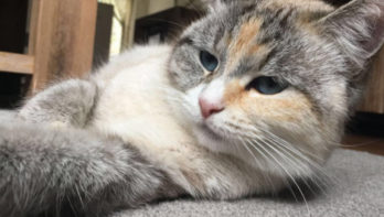 Kat Fien kroelt graag