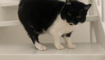 Gradus asiel kat verhuisdier