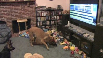 Hond kijkt favoriete film