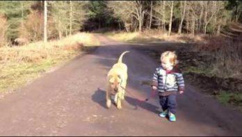 Hond, kind en regenplas