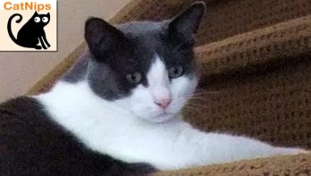 Kat gaat glijdend van de trap af