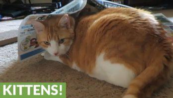 Kat is gek op... reclamefolders!