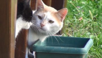 Kater betrapt door zijn kattenvriendinnetje