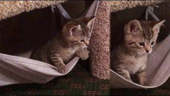 Kitten heeft lol in zijn hangmat