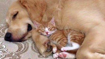 Hond en kat knuffelen en spelen